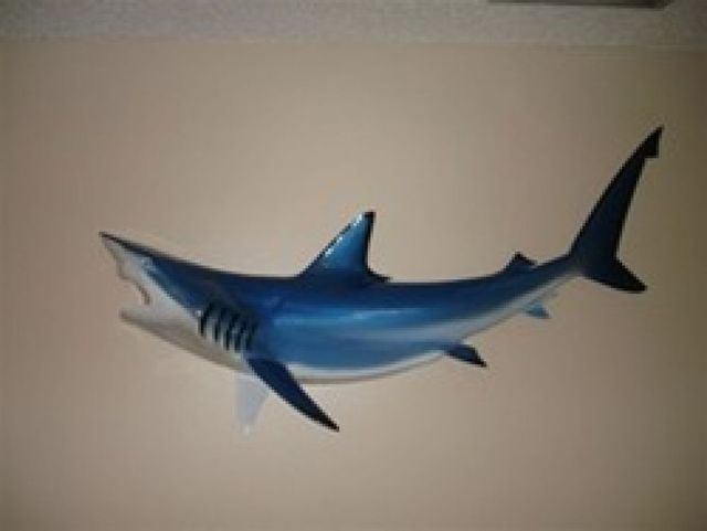 Blue Black-Tip Shark Replica 50
