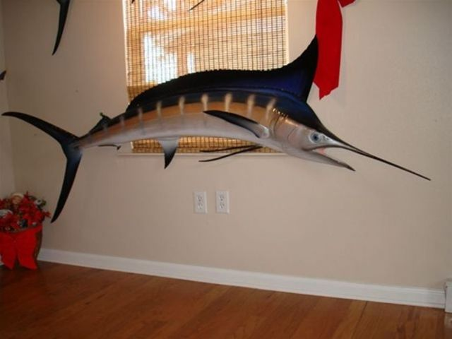 Blue Marlin Fish Replica 90