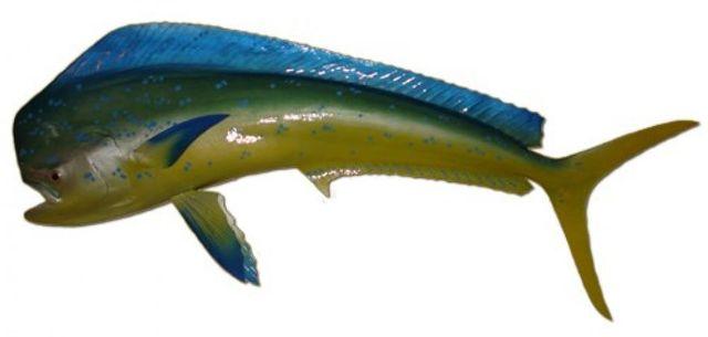 Mahi Fish Replica 50
