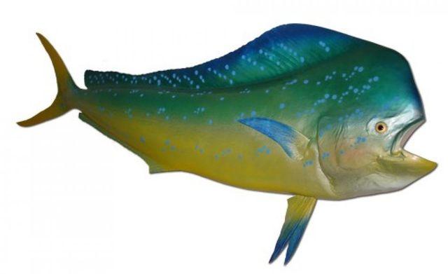 Mahi Fish Replica 72