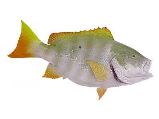 Mutton Snapper Fish Replica 32