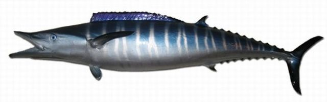 Wahoo Fish Replica 75