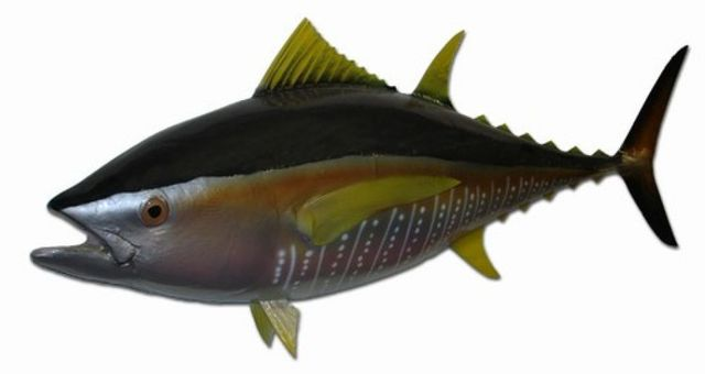 Yellowfin Tuna Fish Replica 38