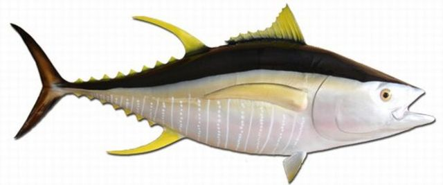 Yellowfin Tuna Fish Replica 55