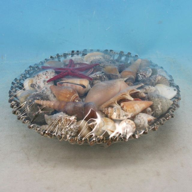 Decorative Basket Of Large Seashells 10