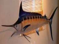 Blue Marlin Fish Replica 94