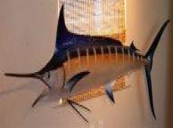 Blue Marlin Fish Replica 96