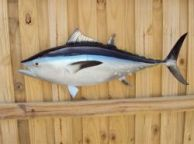 Bluefin Tuna Fish Replica 38
