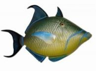 Queen Trigger Fish Replica 30