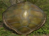 Green Turtle Shell Replica 32