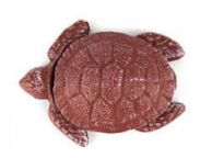 Red Whitewashed Cast Iron Decorative Turtle Bottle Opener 4