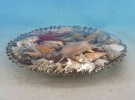 Decorative Basket Of Large Seashells 10