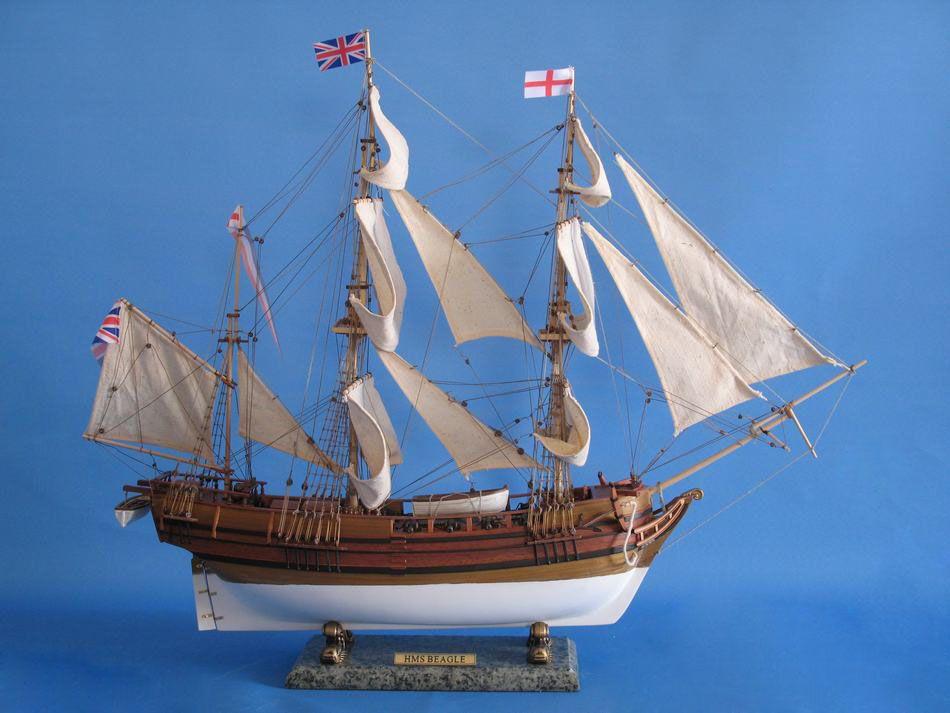 Buy Hms Beagle Limited 30 Inch Boats Model Tall Ship