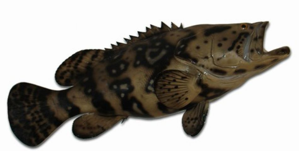 Buy Goliath Grouper Fish Replica 35 Inch Beach Decor