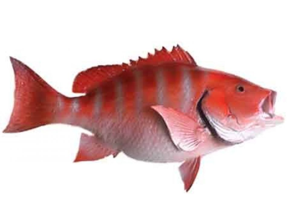 Buy red snapper fish replica 32 inch beach decor sea for Red snapper fish