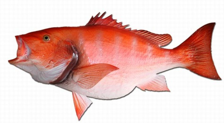 Buy red snapper fish replica 39 inch beach coastal decor for Red snapper fishing