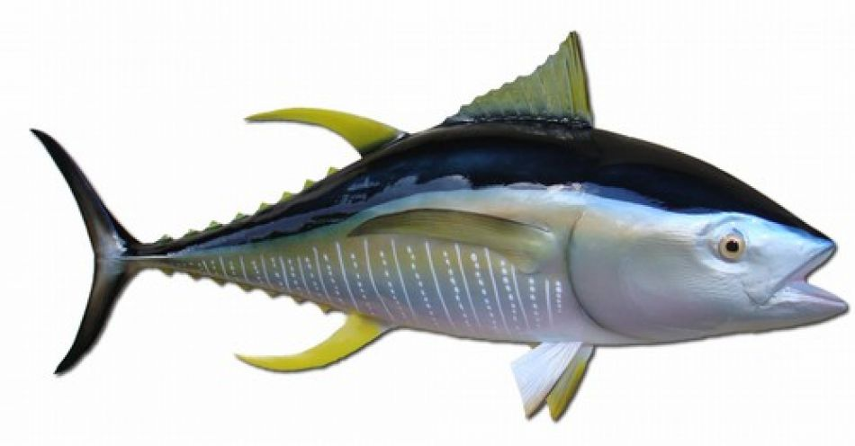 Buy yellowfin tuna fish replica 52 inch coastal living sea for Ahi tuna fish