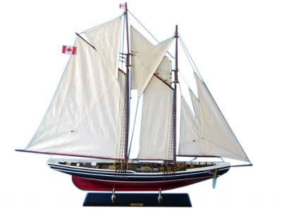 Bluenose Limited 50