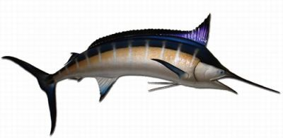Blue Marlin Fish Replica 120
