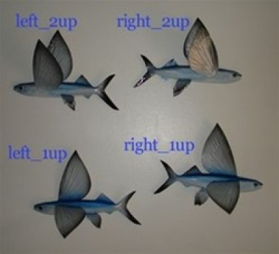 Flying Fish Replica 15 - Right 2 up