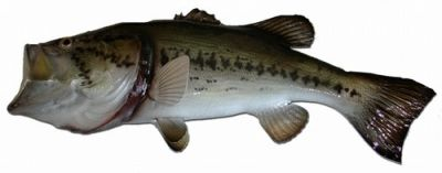 Largemouth Bass Fish Replica 22