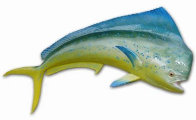 Mahi Fish Replica 60