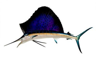 Sailfish Replica 60