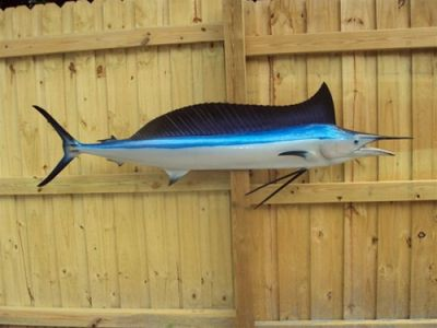 Shortbill Spearfish Replica 70